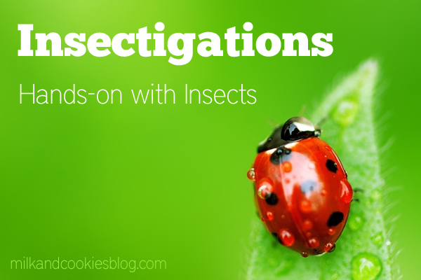 Insectigations Hands-on with Insects @brightideasteam @amy_stults