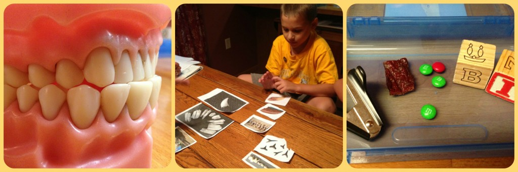 Studying Variation Through Teeth: Creation Science Homeschool Co-Op