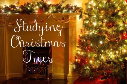 Studying Christmas Trees